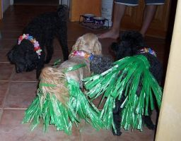 Grass Skirts by Michellestarz