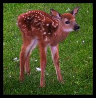 I LIKE BABY DEER by mutatedpie