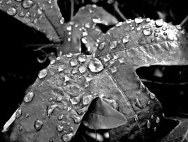Rained Leaves by riona