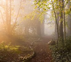 STOCK: Misty Forest light 4 by needanewname