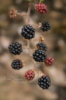 Wild Berries by MissLoony