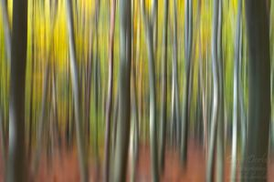 Autumn Forest Abstract by Dave-Derbis