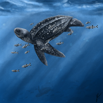 Leatherback Sea Turtle by gothams--reckoning