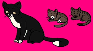 FREE Cat Adopts !Opennn! by woodsybirds