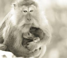 Mother and Child by wilmil