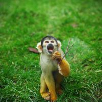 Monkey Monkey by Alexandre-Bordereau