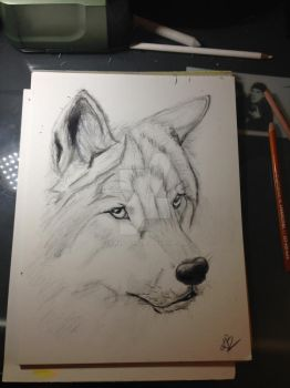 Wolf head by LauraBlackmore