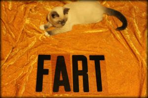 cat fart by live-by-evil