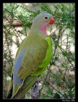 Posing Parrot by DarthIndy