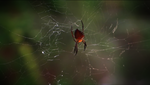 Spider Wallpaper by NBDA