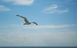 Seagull... by rayxearl
