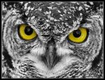 Eagle Owl by mitchellkrog