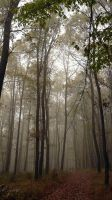 Forest by Agaver