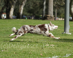DiscDogs Local Tournament 8 by Deliquesce-Flux