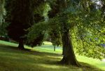 In the park by LiveInPix