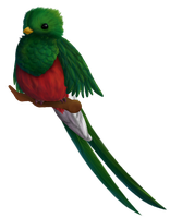 Quetzal by Brookreed