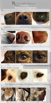 Nose ,eye and Ear Photo References (Dog) by NecktiePom