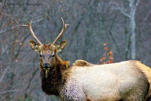 Elk County 11/2013 Part 5 by GlassHouse-1