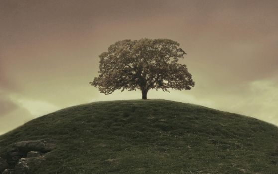 one tree hill - desktop 2 by luckydesigns