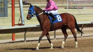 Racehorse Stock 12 by Rejects-Stock