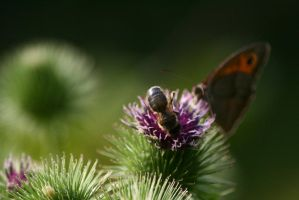 butterfly and others 1 by pejubo
