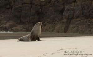 Sandy Sea Lion by Shadow-and-Flame-86