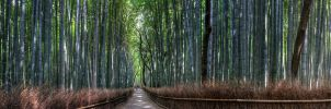 Foret de Bambou by frenchbear