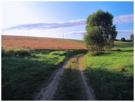 Country road by Liuanta