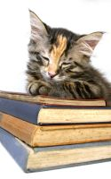 Kitten and Old Books by Spanishalex