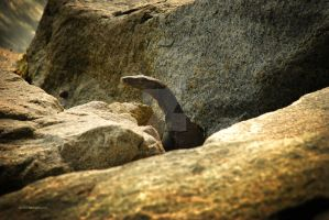 Komodo Dragon Lizard 2 by sarthahirah