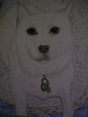 A drawing of my dog