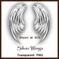 Silver Wings by shd-stock