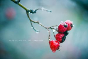 Hiver by JunnyPhotography