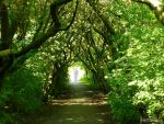 The Pathway To Life In The Past by Estruda