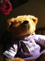 StonGinya Collection: Teddy 1 by AmaltheaTwin
