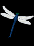 Dragonfly by fielious