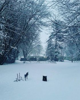 my backyard in the winter by DaArtistsareawesome