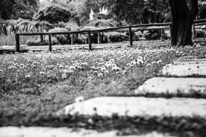 Walk In The Park by Parachromal