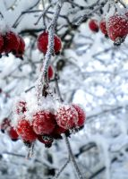 Berries by Piial