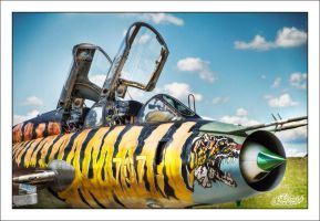 Polish Tiger by sG-Photographie