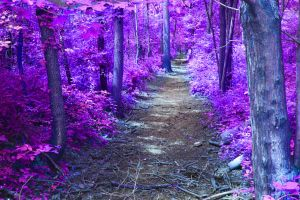 purple path by ragnarok-1