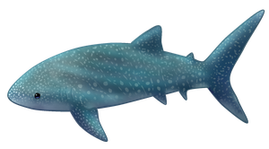Whale Shark by BlackIcedTea