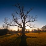 Solitary Tree at Crom Castle by mole2k