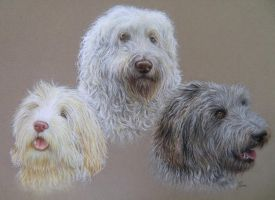 Labradoodles by pamslaats
