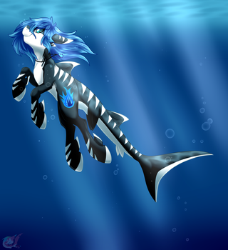 Sharkie Middy (Updated Design) by MidnightLighty