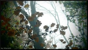 Into The Magic Forest by Miarath