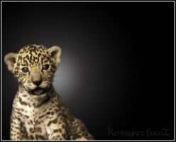Youngest Eyes by kevissykez