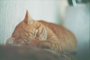 Sleeping Cat by Stell1o