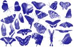 25 butterfly Photoshop brush by aswad-hajja