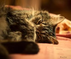 MY CAT by MaxKarita